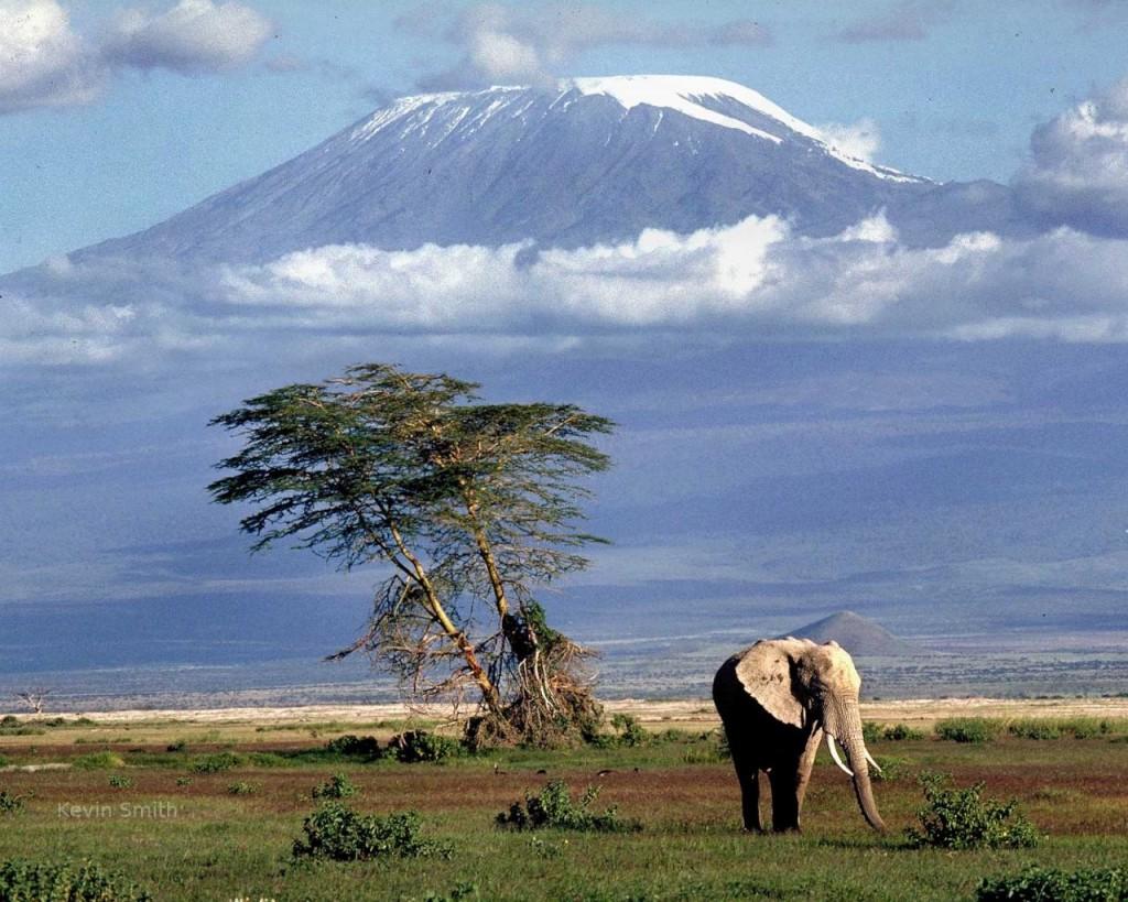 Paisaje Kilimanjaro